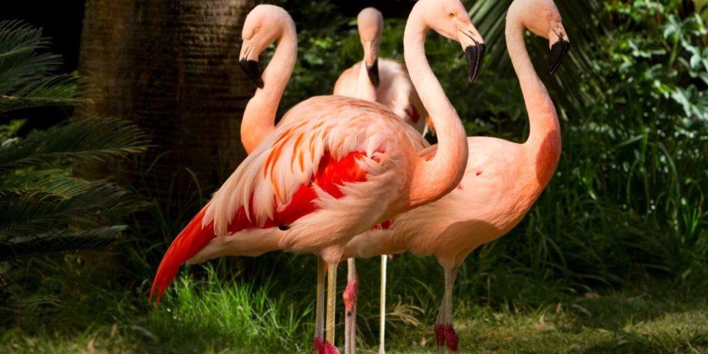 Onde ver flamingos em Las Vegas